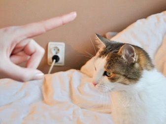Почему нельзя бить кошек - предостережения и как воспитать