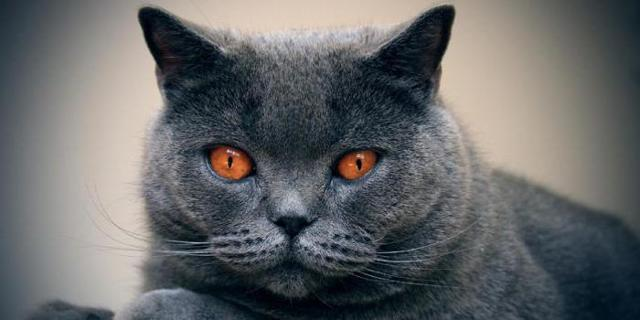 Кошки с зелеными глазами - фото и описание пород