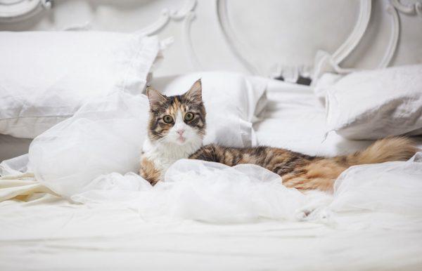 7 причин, почему кошка гадит на кровать - что делать