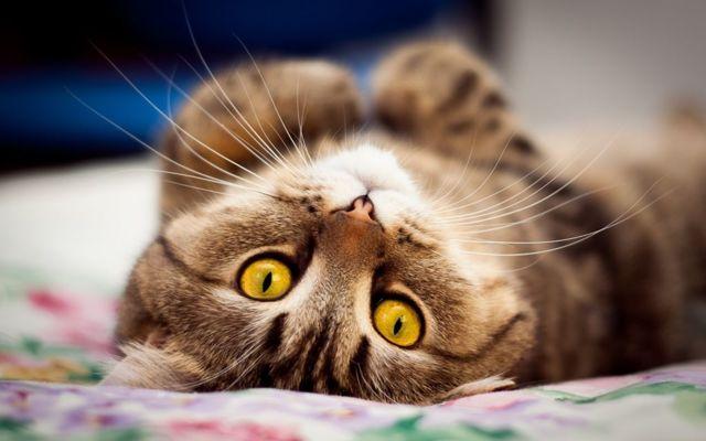 Мастит у кошки - как лечить и что делать