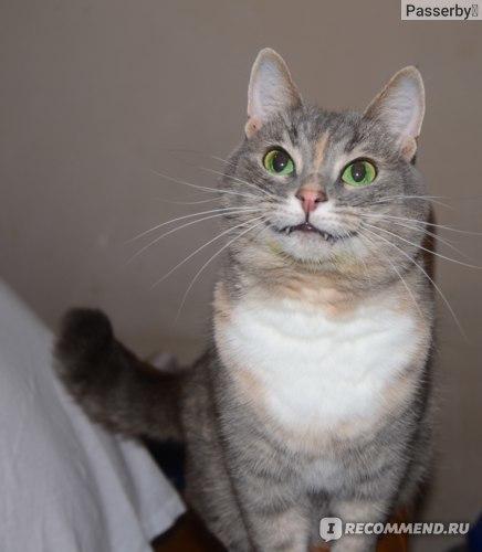 Календула для кошек - показания к использованию