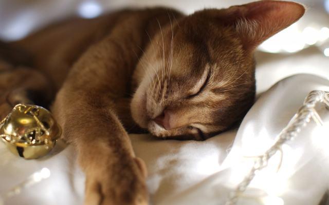 Сколько часов спят кошки в сутки