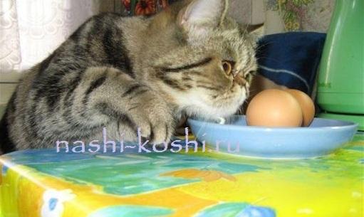 Сыр кошке: можно или нет