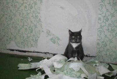 Как защитить обои от кошек?