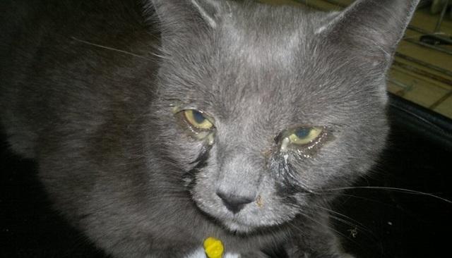 У кота слизь в моче - причины, симптомы, лечение