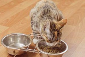 Температура у кошки после стерилизации - уход после операции