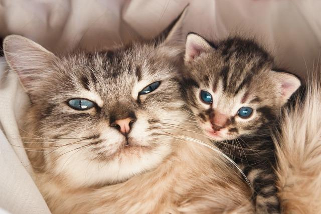 Кошка линяет - причины и  что делать