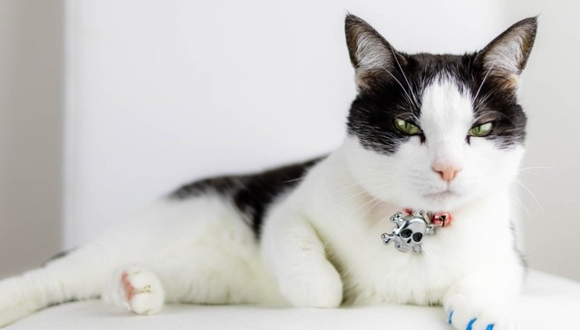 Кошка сошла с ума - причины и что делать