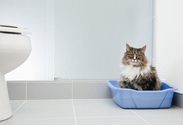 9 причин почему у кошки кровь в моче - симптомы и лечение