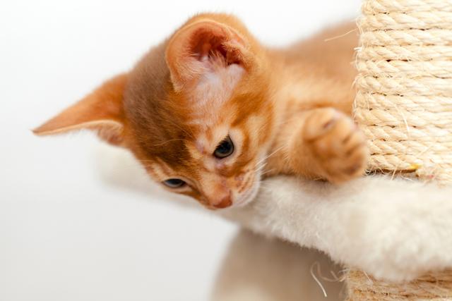 9 методов как отучить котенка кусаться