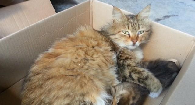 3 причины почему кот постоянно рвет - что делать