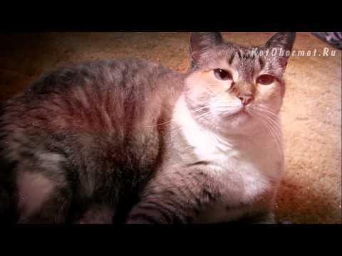 4 причины, почему кошку рвет сухим кормом