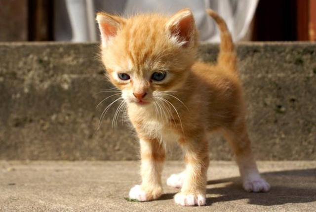 5 причин почему котенок не растет - что делать