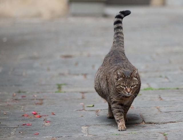 У кошки висит живот - причины и что делать