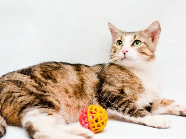 Хилак для кошки: инструкция по применению