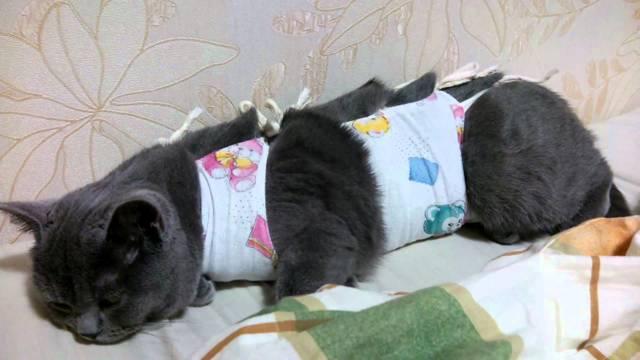 Как ухаживать за кошкой после стерилизации - советы