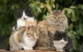 8 симптомов ФИПа у кошек - лечение и диагностика