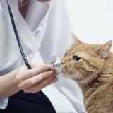 Линкомицин для кошек - инструкция по применению, дозировка