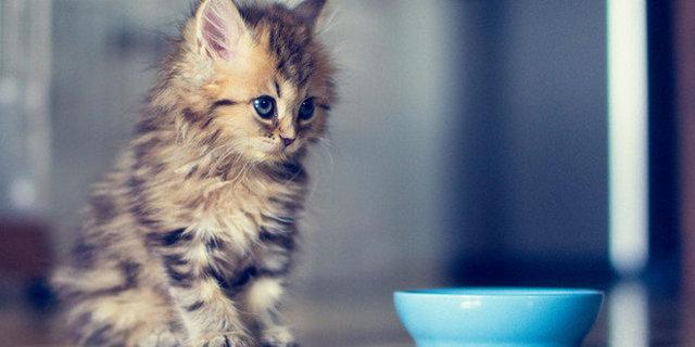 Как часто кормить котенка?