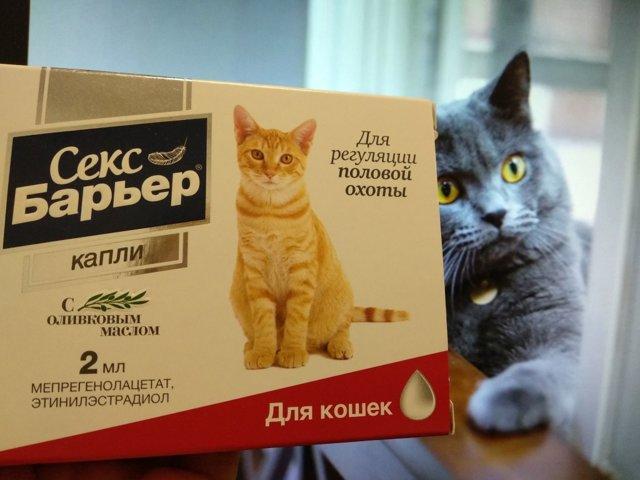Капли и таблетки для кошек от гуляния