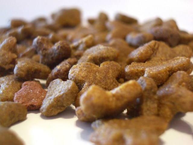Чем кормить кота при мочекаменной болезни - в домашних условиях