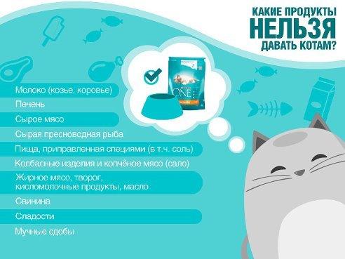 Сметану котятам - можно ли давать