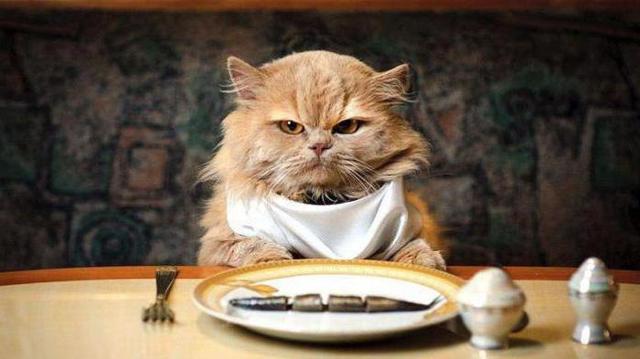 Сколько корма давать кошке и как часто