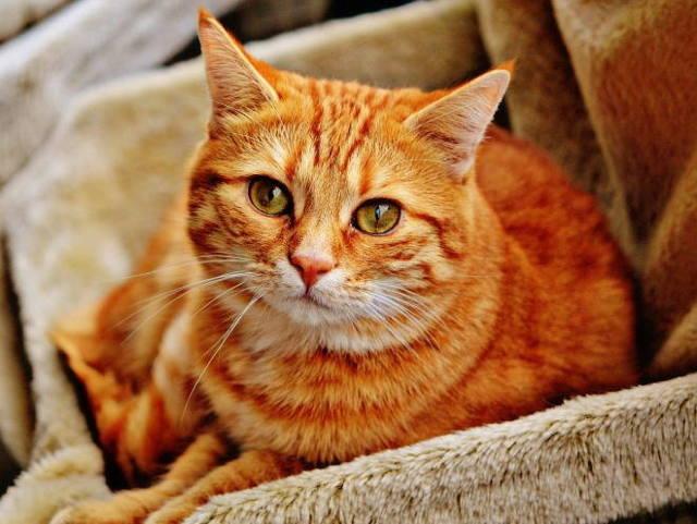7 причин грибка в ушах у кошек - виды и лечение