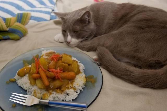 10 причин почему кот отказывается от еды - что делать