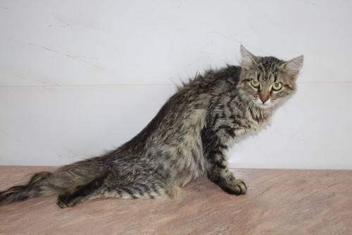 13 симптомов инсульта у кошек – лечение и профилактика