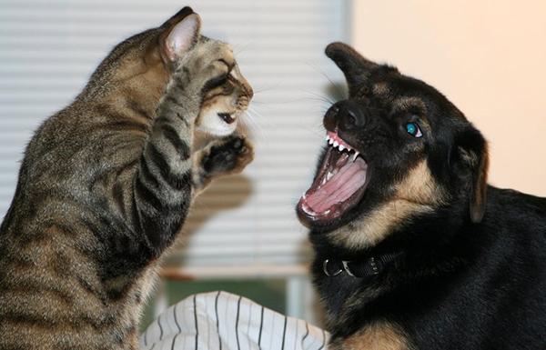 Почему собаки не любят кошек - 6 причин