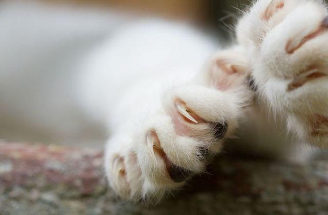Удалить когти коту - последствия, уход после операции