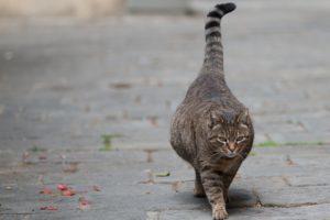 как ведет себя кошка перед родами - признаки родов