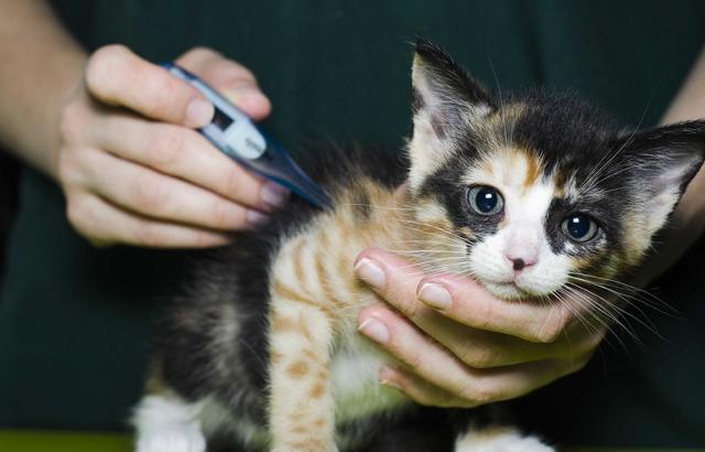 Сальмонеллез у кошек: как проявляется и что делать