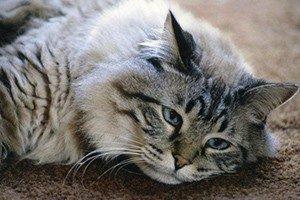 Ренал Эдвансед для кошек - инструкция по применению, состав, цены