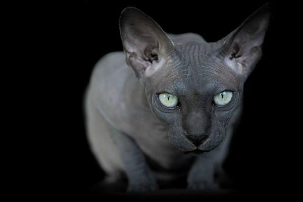 Самые милые породы кошек - ТОП 20