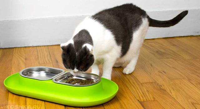 6 причин почему кота рвет по утрам - что делать
