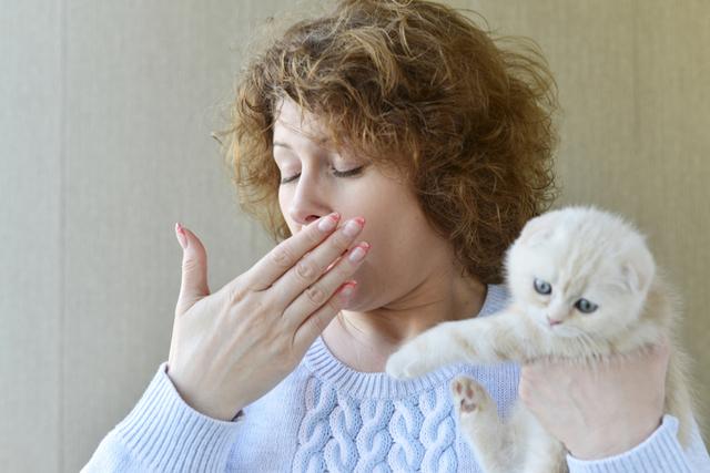 7 симптомов аллергии на шерсть кошек - лечение и профилактика