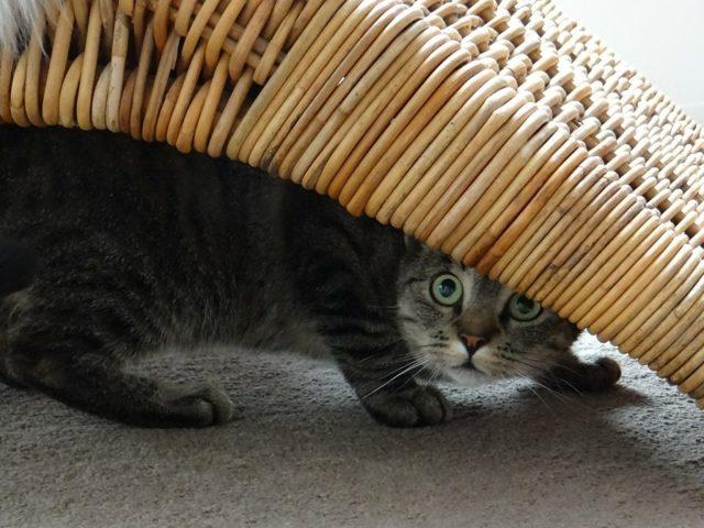 Кот не ест не пьет не ходит в туалет