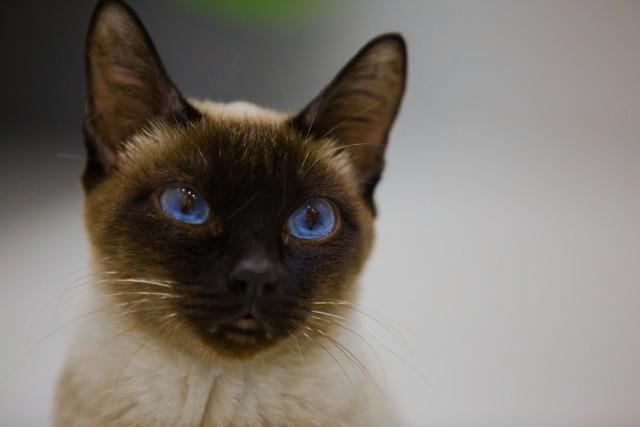 Котенок чихает и слезятся глаза - причины и лечение