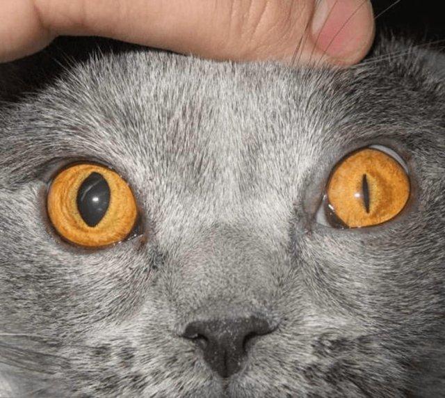 Болезни глаз у кошек - причины, симптомы, лечение