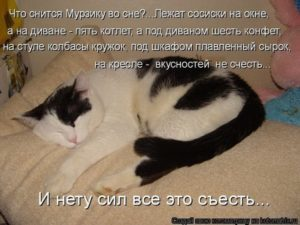 Снятся ли кошкам сны и какие