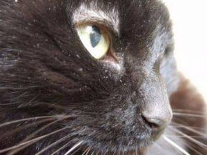 Тетрациклиновая мазь для кошек: инструкция по применению