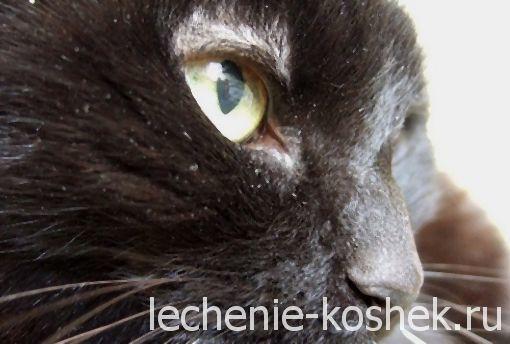 Болячки у кошки на спине - причины, симптомы, лечение
