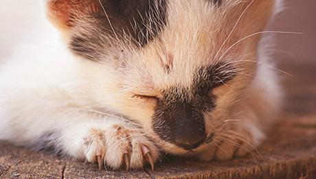 Как кошка ухаживает за котятами