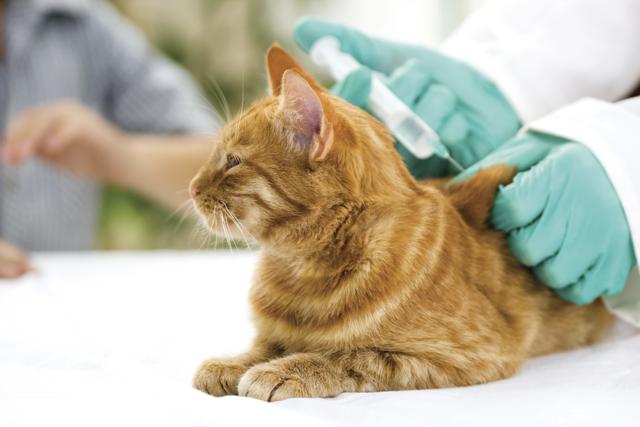 Сколько времени кот может не писать?