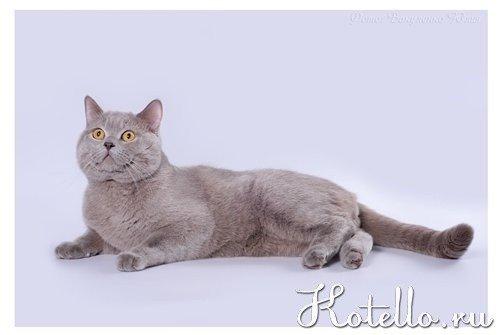 Редкий окрас кошек - список пород