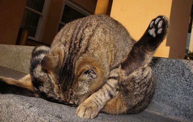 7 причин почему кот лижет стены и пол