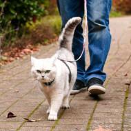 Причины липидоза печени у кошек: симптомы и лечение