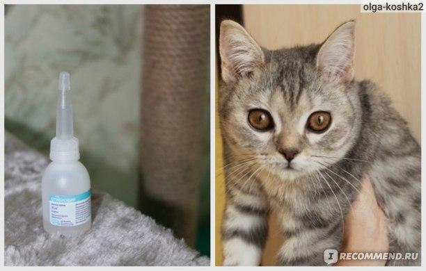 Сера в ушах у кошек - 5 причины и последствия